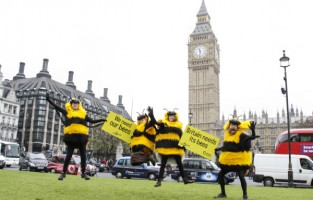 Happy bees at Parliament