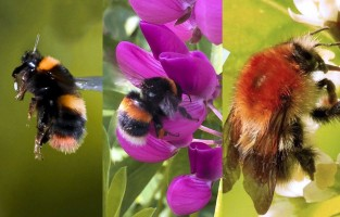bees spotted in the Great British Bee Count