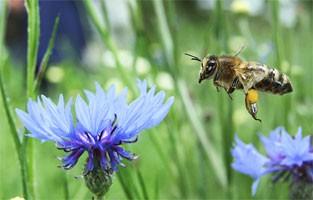 Bee near flower